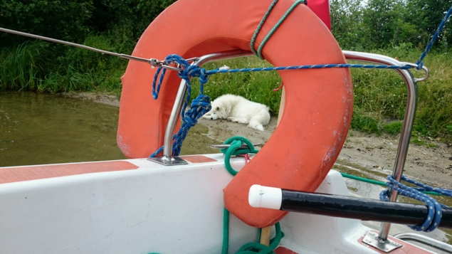 Henryk Myszka (Pies żeglarski)
